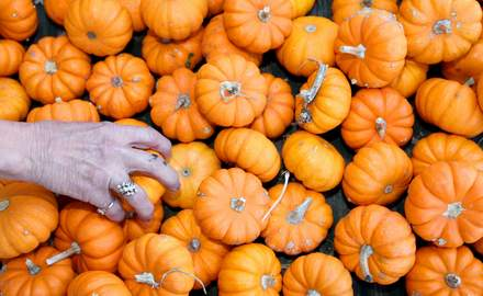 Tasty pumpkin recipes are a seasonal delight
