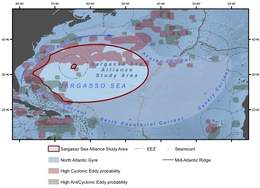 Experts join Sargasso Sea Commission